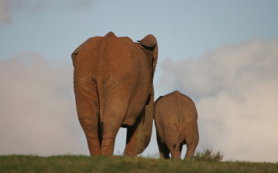 What Do Elephants And Polyamory Have In Common?